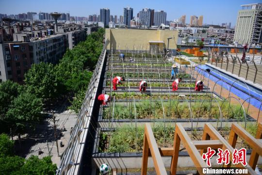 学校楼顶被开辟成一块块儿整齐的田地。