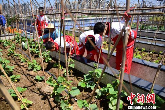 课余时间学生到农场观察农作物的生长情况。