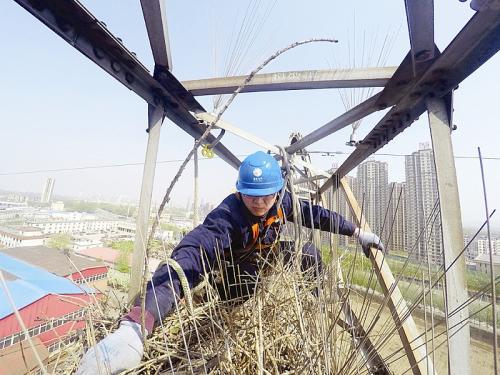 5日上午,鞍山供电公司的技术人员在宁远屯一处220千伏电网铁塔上安装