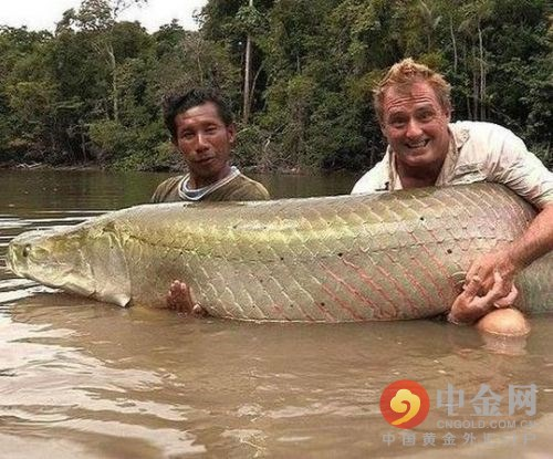 """湖南發現全球稀有""""人面鯉魚""""_史上奇葩魚大盤點"""