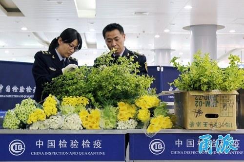 """出境旅游想带高颜值""""洋鲜花""""回来?怎么带来看看吧"""