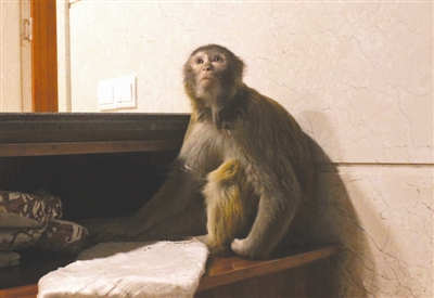 """外�怼��猴""""峨嵋山抓��旅客"""
