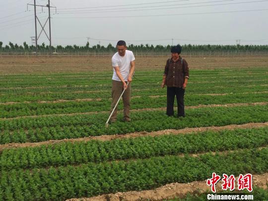 董谦在田间为种植户讲解中草药正确的种植方法。 张鹏翔 摄