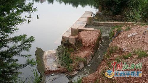 建在水中的化粪池和猪粪便直排挤口