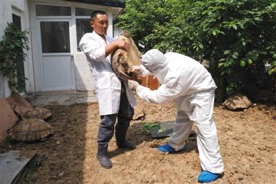 动物隔离检疫场采血通道
