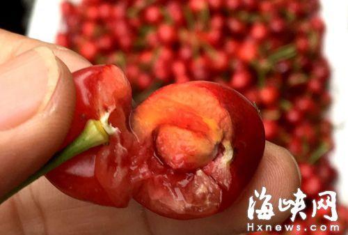 樱桃果核很小,且不易嚼碎、消化