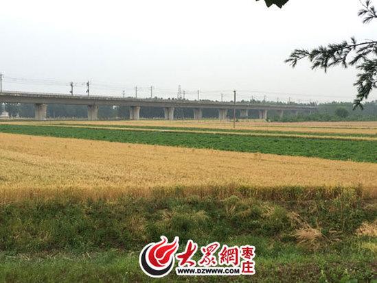 距京沪高铁不足百米