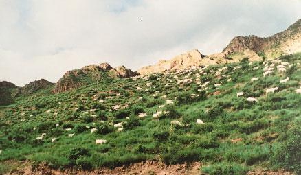 过度的放牧对植被造成巨大的破坏