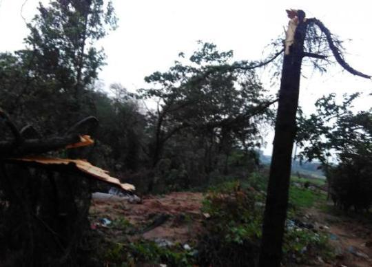 西三环建设路到南三环段,沿途不少行道树被风刮倒,有的树倒在路上,严重影响了交通。