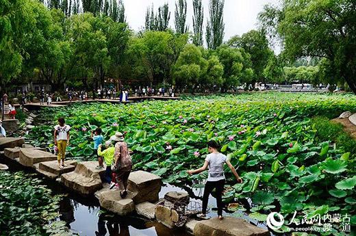 """市民们用""""城在绿中、人在画中""""来描述青城的绿色宜居。(张雪冬 摄)"""