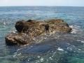 中国海军收复中业岛秘闻