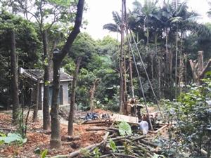 彩田公园内的变电所开工现场曾经歇工。 深圳晚报 图