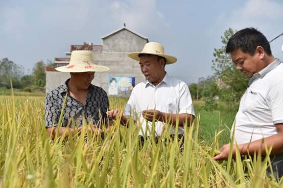徐师龙(中)查看粮食种植情况