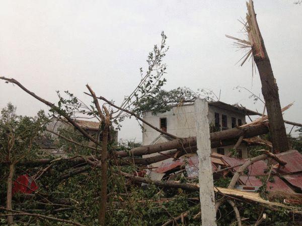两人才抱得住的大树被拦腰截断-龙卷风袭击盐城后 残垣断壁上的家园