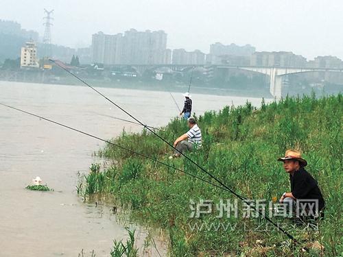 泸州滨江路长江沿岸的垂钓者:洪峰过境 钓鱼更考技术(图)