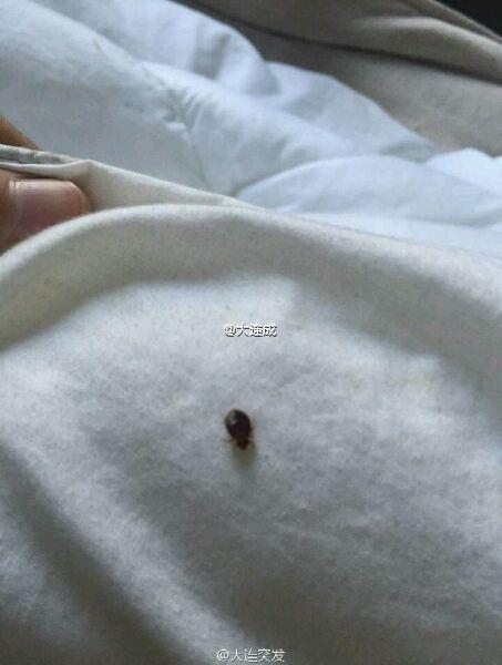 """宿舍里的黑虫。图像来自微博网友""""大连成"""""""