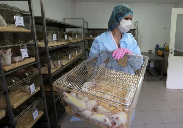 本地时刻2015年6月10日,俄罗斯医学科学院养分科学所内,转基因大豆实验中的小白鼠。 东方IC 材料
