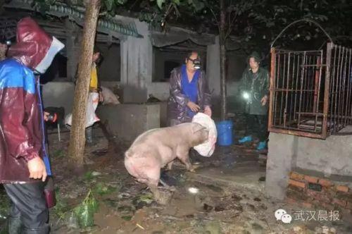 牲畜连夜转移。