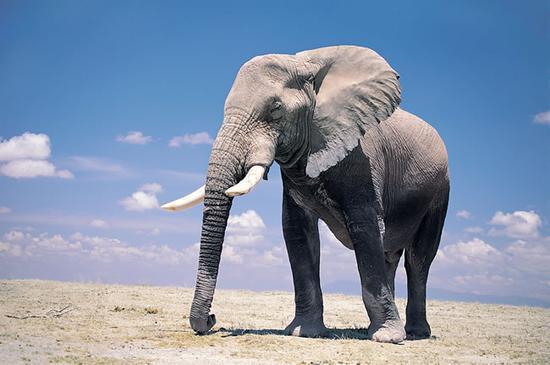 首都马普托国家野生动物园的一辆观光车朝大象鸣笛