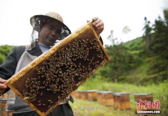 专家指出:努力提高中国蜂产业自主创新