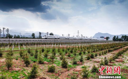 据青海省林业厅7月11日发布该省生态公益林建设评价结果,数据显示青海生态公益林综合效益为2196.18亿元。资料图为青海省西宁市西山造林地。 罗云鹏 摄