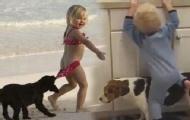 动物是宝宝朋友还是敌人