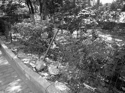 """""""好好的街边绿化带都快变成公共垃圾场了!""""7月6日,家住西安市北二环八水上筑的王先生向华商报新闻热线029-88880000反映,称西安市北二环未央立交东南侧,二环北路东段沿街绿化带内有不少生活垃圾,""""原本用来美化城市的绿化带,成了藏污纳垢的'垃圾带',夏天天气热,招来不少蚊虫,又脏又臭""""。"""