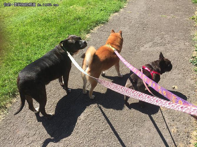 老司机发现让自己的狗跟宠物小精灵们合影是件非常有趣的事情,当然他