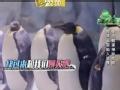 《挑战者联盟第二季片花》第七期 范冰冰变壕姐喂企鹅 学企鹅走路遭企鹅群无视