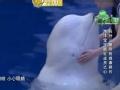 《挑战者联盟第二季片花》第七期 李晨调教谢依霖求下蛋 范冰冰吻白鲸遭湿身