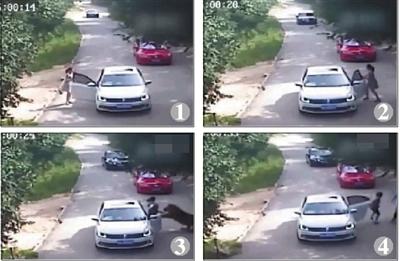 事发时园区监控显示,一年轻女子从一轿车下车(图1),打开驾驶座车门和一男子说话(图2),一只老虎忽然蹿出将女子叼走(图3),后一年长女子下车与男子一起施救(图4)。视频截图