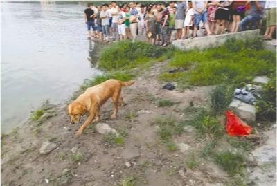 金毛狗留在江边,好久也不肯分开