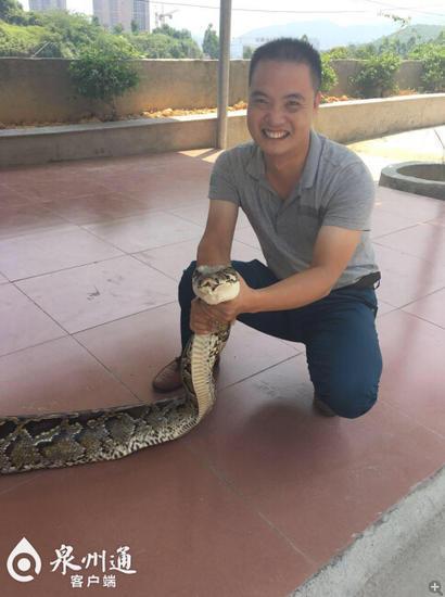 通过称重蟒蛇重61斤。抓蛇的谢徒弟说,这是近些年来安溪捕获最大的一条蟒蛇。