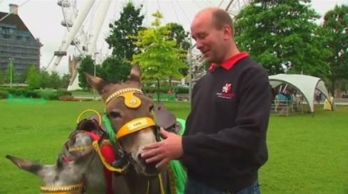 驴语者马克说,他很疼爱这些驴子。