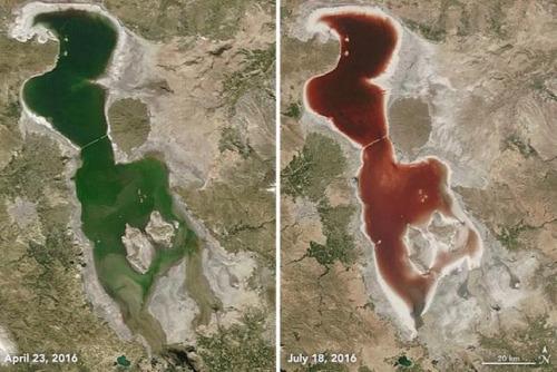 今年4月23日,乌尔米湖的湖水还是绿色,但在7月18日变成血红色。NASA