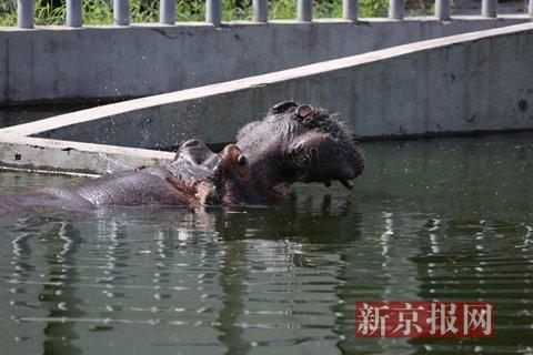 高温福利 北京动物园动物吃水果抱冰块(图)