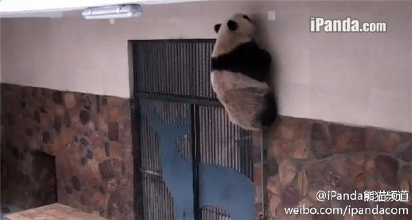 为什么上面也没有门啊摔!