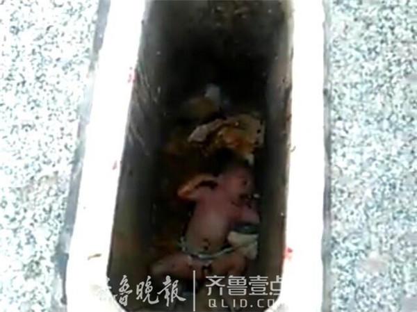 依据网友公布的图像,记者看到,被扔在公厕的孩儿是一位婴儿,满身赤裸躺在便池内,身上沾了很多粪便。从图像来看,女婴疑似刚出身,身上的脐带还没断。