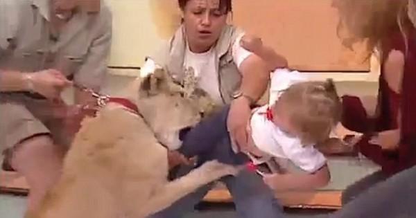 危急万分!电视直播中,幼狮突然扑咬女童(组图)
