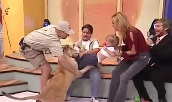 狮子兽性大发,攻击小女婴。(取自《每日邮报》)