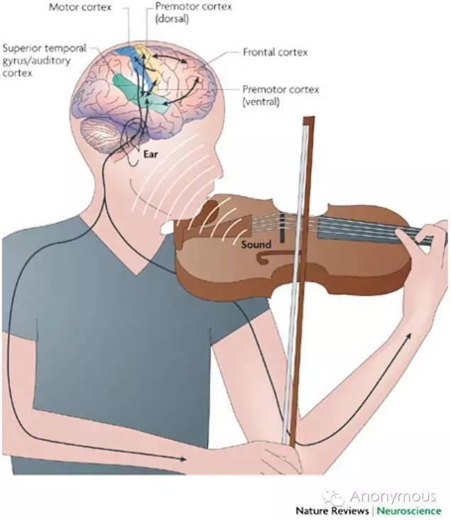 情趣在我们原来的理解中,这两项能力与音乐相隔甚远。研究让我们认识到乐器学习对帮助孩子探索广阔世界的重要作用。