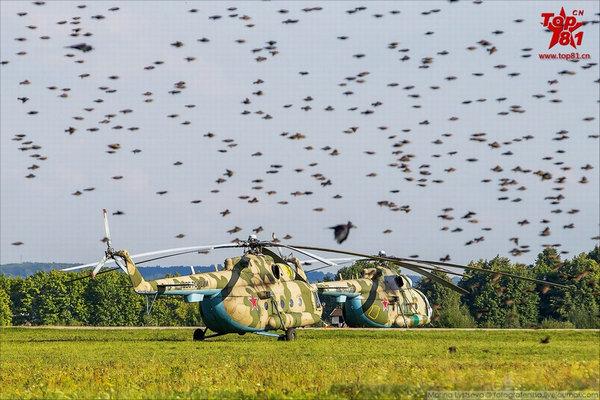 俄军机场遍布鸟群战机照飞不误