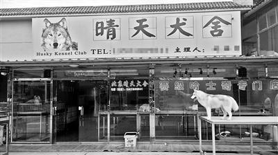 京沈快速快到六环的路北,有一条日新路,路阁下座落着北京地域甚至华北地域最大的犬类买卖商场――戏班狗市。日前,通州区出台《关于通州区低端饲养业和莳植业调剂退收事情的定见》,提出两年内要清退低端饲养业。而身处举世影城周边的戏班狗市,因为与计划不符,已被宣告关停,固然另有局部商户留守,但也面对着全部清退的运气。