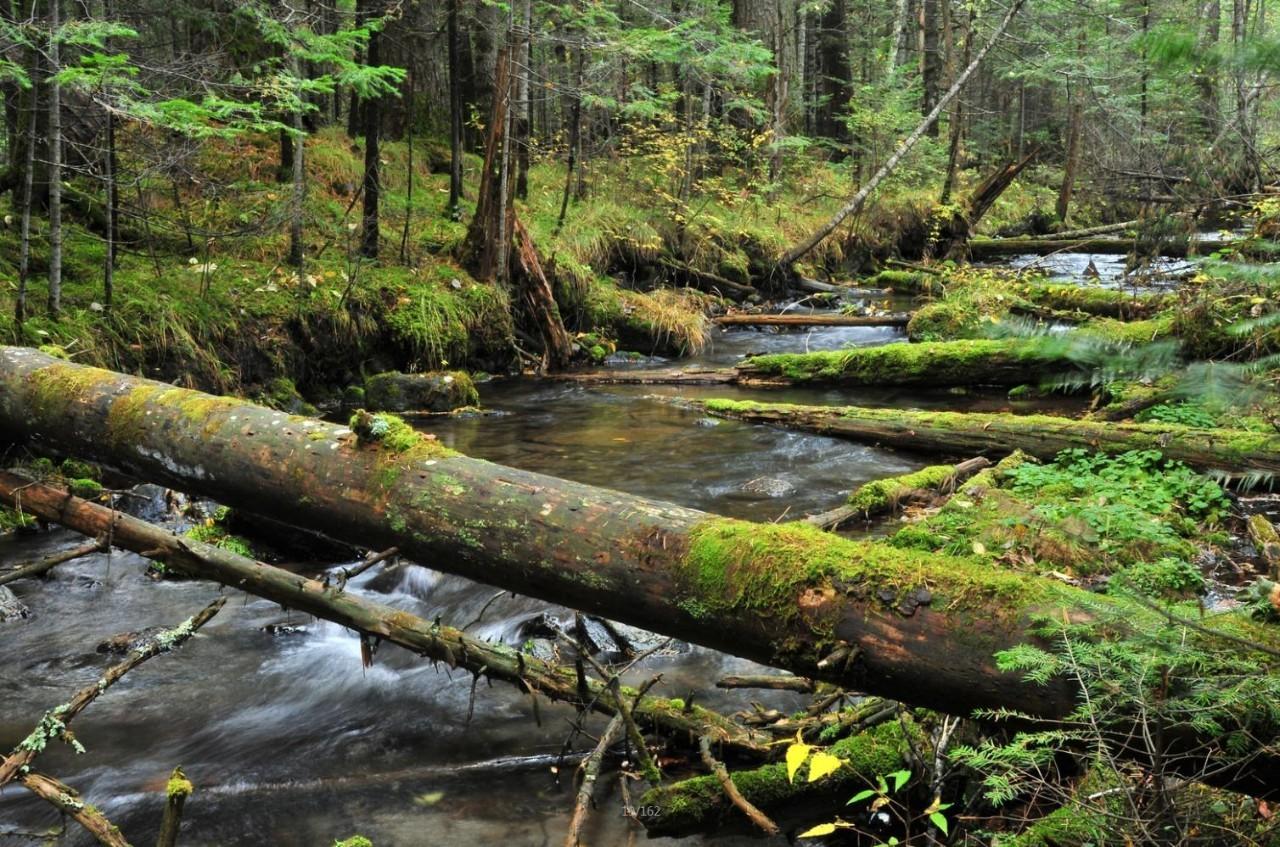 因而森林生态系统图片
