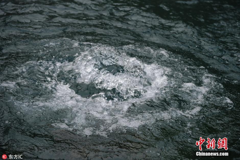 """8月17日早晨,山东济南,雨后的趵突泉水位升到了29.14米,一夜之间升了27公分,可谓奇观。狂喷的趵突泉群在初秋清冷的氛围中造成团团白雾,如同瑶池普通,再现了前史上的驰名景象""""云雾润蒸""""。2016年8月17日凌晨,济南,趵突泉,三股水""""水涌若轮"""",呈现""""云雾润蒸""""美景。东方IC 版权着作 请勿转载"""
