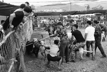 见野猪曾经没有了战争力,一位50岁摆布的女子先是趁野猪与猎狗厮打之际,一刀戳进了野猪的肚子,后又拿着一根长约1.5米的蛇矛,刺穿了野猪的心脏。