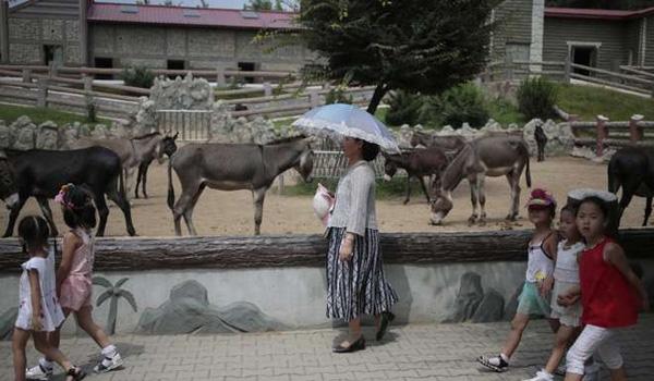 《南华早报》征引朝鲜民间记录称,最后植物园只要50只獾。