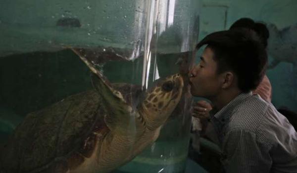 一位朝鲜人正隔着玻璃亲吻一只海龟。