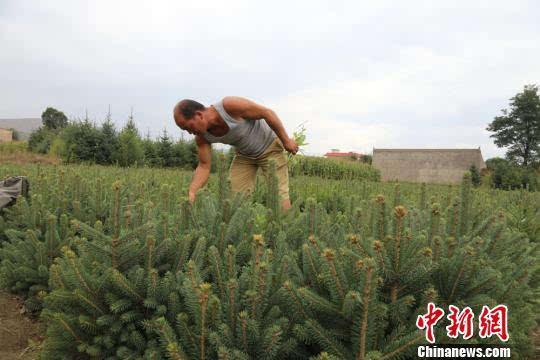 图为农户种植的苗木。刘玉桃摄