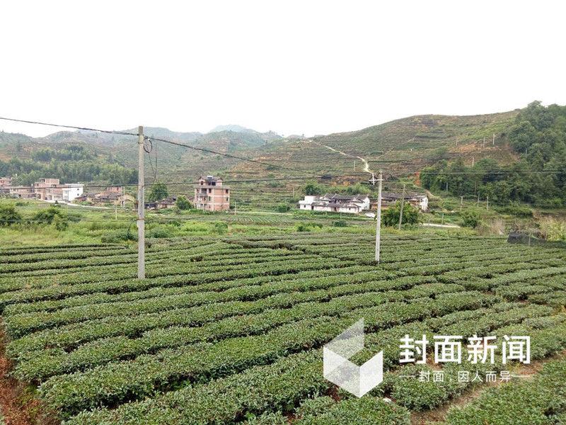 茶山脚下,典型的闽南居民正逐渐被小楼房替代。